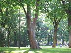 新宿中央公園4