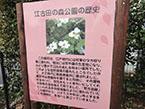 江古田の森公園2