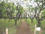羽根木公園6