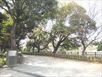 碑文谷公園7
