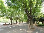 駒沢オリンピック公園10