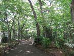三井の森公園2