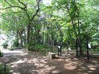 三井の森公園3