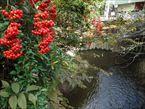 武蔵関公園2