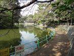 武蔵関公園10
