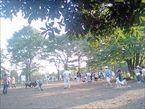 大井ふ頭中央海浜公園5