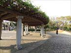 都立大泉中央公園9
