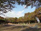 都立大泉中央公園12