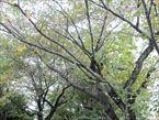 中町せせらぎ緑地公園4