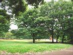 祖師谷公園1