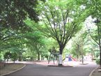 祖師谷公園4