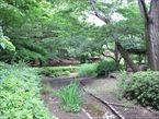 祖師谷公園5