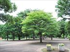 祖師谷公園9