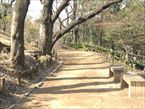 戸山公園6