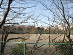 戸山公園11