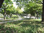 葭根公園4