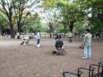 代々木公園5