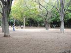 代々木公園6